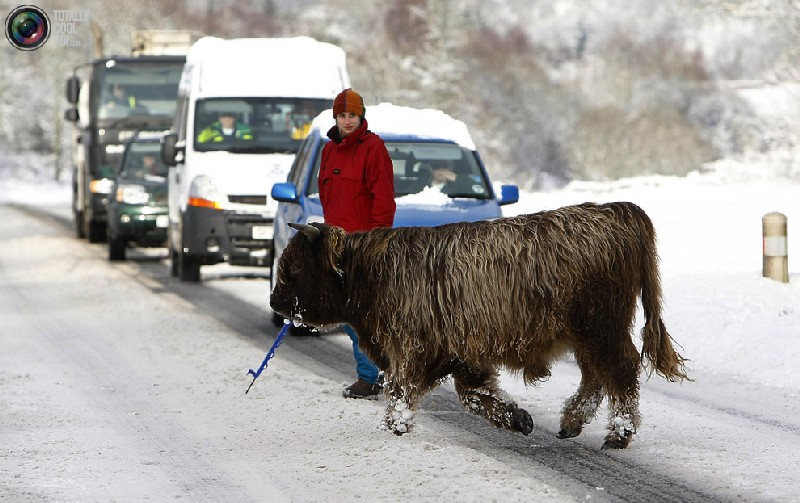 Фото животные на дороге