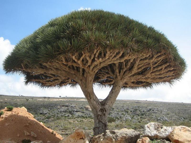 Экзотические деревья  и названия